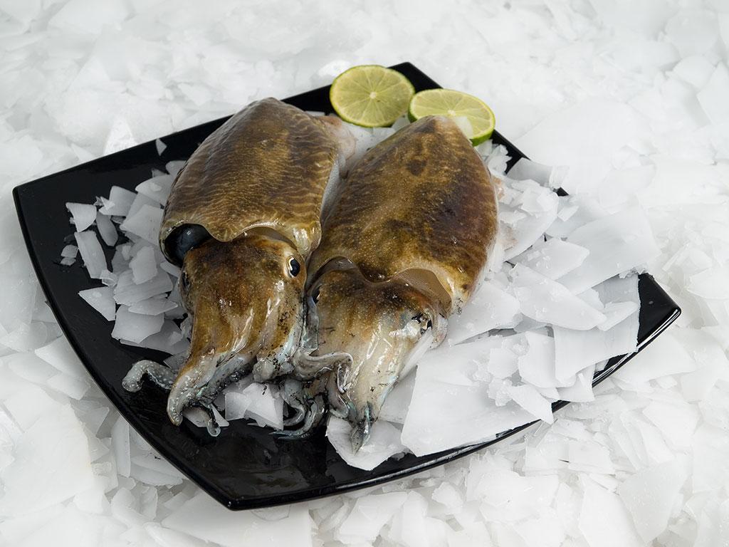 Centaurus - svježa i smrznuta riba - sipa